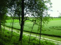 Camp romain - Nederlands: Keltische omwalling uit de Ie eeuw v.C. bij La Cheppe, Marne, Champagne-Ardenne. In de negentiende eeuw kreeg dit oppidum van de vlakte de benaming