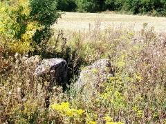 Dolmen de Coppière - Français:   L\'allée couverte de Copierre a perdu les dalles la recouvrant et se présente comme une cavité rectangulaire, dont les parois sont formés par des grandes dalles. L\'ensemble est envahi par la végétation au point de rendre à peu près invisible le monument. Il se trouve au sein d\'un champ, et l\'accès n\'est pas signalé; quand le champ est en culture, l\'accès est de toute façon impossible.