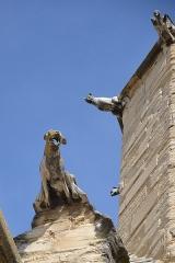 Eglise Saint-Siffrein, ou ancienne cathédrale - Français:   Gargoyles de la cathédrales Saint Siffrein de Carpentras