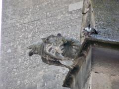 Eglise paroissiale Notre-Dame-des-Anges - Français:   Isle sur la sorgue - Gargouille de église ND des Anges