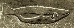 Abri à sculpture dit Abri du Poisson et abri Lartet - Español: Pez (¿salmón?) en relieve de la cueva de Gorge d'Enfer (Les Eyzies, Dordoña, Francia)
