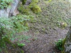 Gisement préhistorique du Ruth ou Abri Pagès - Français:   La partie inférieure du gisement préhistorique du Ruth, Tursac, Dordogne, France.