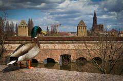 Grande écluse de fortification dite barrage Vauban et ses abords fortifiés - Français:   Strasbourg barrage Vauban façade ouest