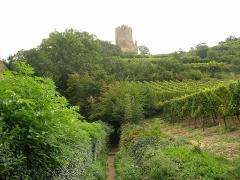 Château dit Schlossberg et enceinte - Français:   Château de Kaysersberg (290 m) (Haut-Rhin, France).