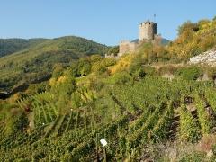 Château dit Schlossberg et enceinte - Français:   Château et vignobles et Kaysersberg