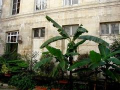 Maison - Français:   13 rue de Sévigné - Paris 4 Rez-de-chaussée du bâtiment principal sur cour