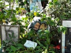 Cimetière Montparnasse - English: Paris, France. Cimetiere du Montparnasse. (Grave of Gainsbourg-detail) (PA00086638)