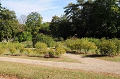 Domaine national de la Malmaison - La petite reconstitution de la roseraie de Joséphine de Beauharnais dans le parc du Château de la Malmaison à Rueil-Malmaison dans les Hauts-de-Seine en France. Certaines roses botaniques ont été cultivées par Joséphine de Beauharnais en pleine terre.