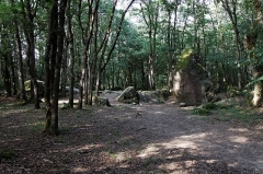 Menhir de Guihallon -  Le menhir de Guihallon à proximité de Tregomar, sur la commune de Lamballe (Côtes d'Armor).