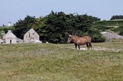Ruines de la chapelle Sainte-Anne -  Vue des vestiges de la chapelle Sainte-Anne sur l'île de Batz.
