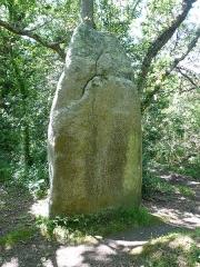 Trois menhirs de Kerfland et bande de terrain autour - Français:   Premier menhir de l\'alignement de Kerfland en Plomeur, Finistère, Bretagne, France.
