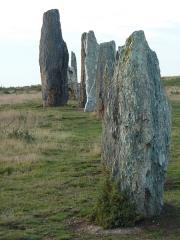 Ensemble mégalithique dénommé alignements de Cojoux - English:  South stone row of Moulin's (Mill's) alignments in the Landes de Cojoux (Cojoux's moorland) , Saint-Just, Brittany, France.