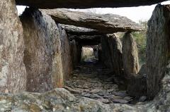 Sépulture mégalithique -  Allée couverte du Tréal.