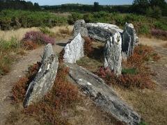 Sépulture mégalithique dite le Four Sarrazin ou les Pierres Chevêches - Français:   Vue depuis l\'ouest dans l\'axe du dolmen qui se situe tout au bout du parcours du site mégalithique des landes de Cojoux, réaménagé en 2018 par le Conseil Départemental d\'Ille-et-Vilaine
