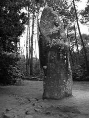 Tumulus dit du Manio, quadrilatère et menhir de Manio - Français:   Menhir de Manio - Carnac - Morbihan - France - Mérimée PA00091138