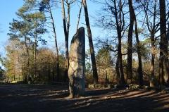 Tumulus dit du Manio, quadrilatère et menhir de Manio - Français:   Menhir géant du Manio, vue de la face arrière, Carnac, Morbihan, Bretagne, France.