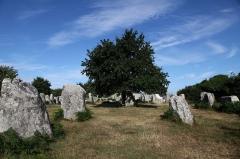Alignements de Kerzérho - Français:   Alignements mégalithiques de Kerzerho - Erdeven - Morbihan