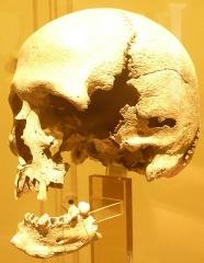 Ilôt d'Er-Yoh (Le Mulon) , près de l'île d'Houat - Français:   Tête d\'homme trouvée sur l\'ilôt d\'Er Yoc\'h, qui dépend de l\'île d\'Houat (fouille de Zacharie Le Rouzic faite en 1924-1925).
