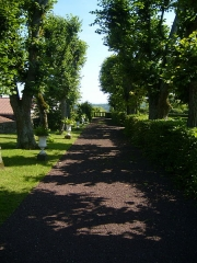 Château d'Opme - English: Alley of old linden trees in lower garden of Chateau d'Opme