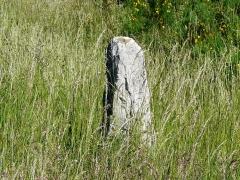 Menhir de Bargueyrac ou de la Pierre Plantade - Français:   Émergeant des hautes herbes, le menhir de Bargueyrac, ou de la Pierre Plantade, Sériers, Cantal, France.