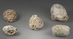 Grotte préhistorique - English:  Coprolite of Crocuta crocuta spelaea  (Cave hyena)   Stage: Aurignacian between 37 000 and 28 000 BP Locality and Collection: Aurignac cave,  Haute-Garonne, France. Former collection of Édouard Lartet, 1861.</dd>