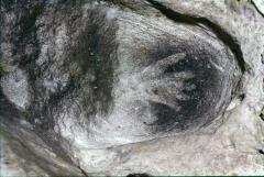 Grotte préhistorique -  Hand in reservation.