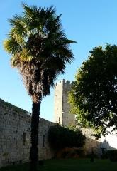 Enceinte fortifiée - Enceinte fortifiée de Larressingle, intérieur, nord-ouest
