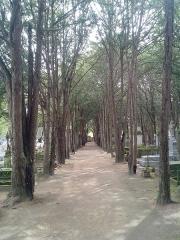 Cimetière -  Une des allées du cimetière d'Amboise