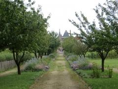 Domaine du château de Talcy - Français:   Allée principale du jardin du Château de Talcy