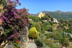 Eglise San Pantaleone -  Barrettali, Cap Corse (Corse) - Église paroissiale San Pantaleone (Saint Pantaléon), inscrite MH, vue depuis le hameau de Mascaracce.