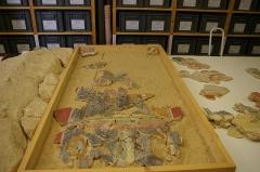 Vestiges archéologiques gallo-romains du lieudit Bois-l'Abbé - Français:   Reconstitution de peintures murales à partir des éléments trouvés lors des fouilles du Bois l\'Abbée Eu