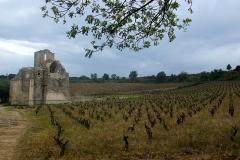 Ruines de l'ancienne église Notre-Dame-des-Oubiels - Français:   Ruines de l\'ancienne église Notre-Dame-des-Oubiels à Portel-des-Corbières (Aude), et vignes