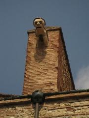 Cathédrale Saint-Jean-Baptiste - Català: Catedral de Perpinyà, gàrgola a la façana sud