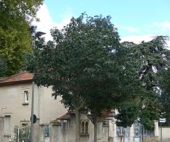 Domaine de Valensolles - Français:   Domaine de Valensolles, le parc et la maison principale sont classés. Propriété privée,vue la densité du parc on ne peut pas apercevoir la maison principale.