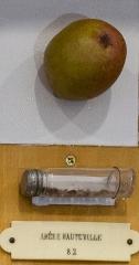 Ecole d'Agriculture de Rennes, aujourd'hui Agrocampus Ouest - École nationale supérieure agronomique de Rennes: collection de pommes en plâtre.