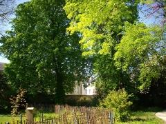 Hôtel Brachet, dit aussi hôtel de la Vieille Intendance - Jardin de la Vieille-Intendance à Orléans (Loiret, France)