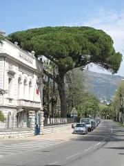 Propriété dite Le Palais Carnoles - English: Stone pine of the palais Carnolès in Menton (Alpes-Maritimes, France).