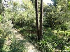 Jardin dit Serre de la Madone -  Jardin Serre de la Madone, Menton, Alpes-Maritimes, France.