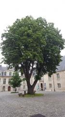 Ancien Evêché - Français:   Tilleul argenté provenant d'une bouture rapportée des jardins du Vatican vers 1860, par Mgr Ravinet (évêque)