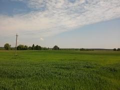 Eglise de Faremont - Українська: Зелені поля с. Хворостів