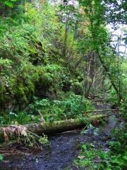 Croix dite de la Périère -  Creek in a forest in the Urals, Russia