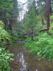 Croix dite de la Périère -  Creek somewhere in the Urals, Russia