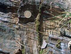 Croix dite de la Périère - English: Two almost perpendicular sets of crenulation lineations on a slaty cleavage. Nura River valley, southern Ural Mountains