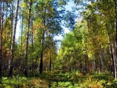 Croix dite de la Périère -  Fall in a forest in the Urals, Russia