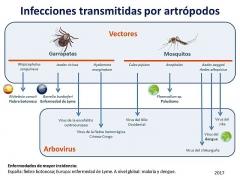 Château d'Ennery - Español: Composición gráfica mostrando las infecciones transmitidas por artrópodos más frecuentes