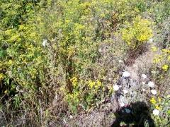Dolmen de Coppière - Français:   L\'extrémité nord-est de la cavité, reconnaissable seulement par l\'ombre entourant les tiges des plantes. En-dessus de l\'ombre du photographe, l\'une des dalles formant l\'allée couverte (aujourd\'hui dépourvue de sa couverture).