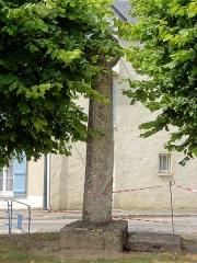 Croix - Français:   Croix Fromage.