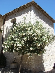 Eglise de la Conversion de Saint-Paul -  Eglise Collegiale, Saint-Paul-de-Vence, Provence-Alpes-Côte d'Azur, France