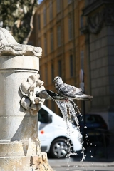Fontaine des Prêcheurs - English: France - Southern France