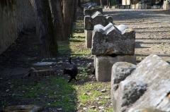 Nécropole des Alyscamps - Détail de sarcophages des Alyscamps à Arles. Ils sont en sculpté dans un calcaire local. Généralement assez simple, il ne porte aucun décor, à l'exception d'une sorte d'herminette ou ascia.
